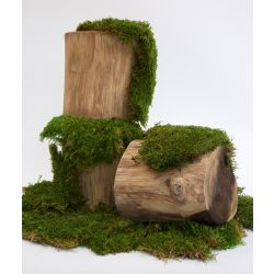 Fora's Premium Flat Moss (Window Box)